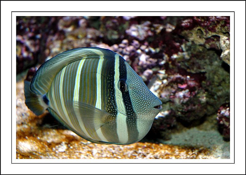 From the Plymouth aquarium, Devon