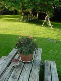 summer table.jpg