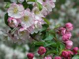 2005-04-22 Blossoms
