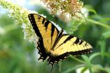 Butterfly  8/2/03