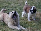 Bubba & Max--Spring, 2001