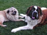 Max & Bubba 5/11/02