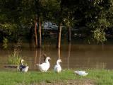 Even Ducks Are Confused