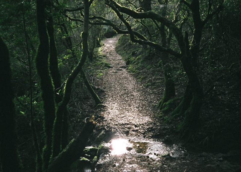 matt davis trail Marin County