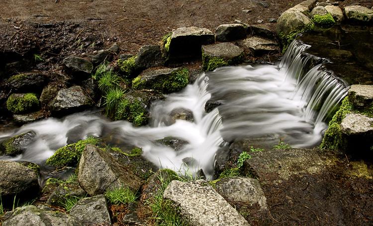 0436-Fern-Spring-flowing.jpg