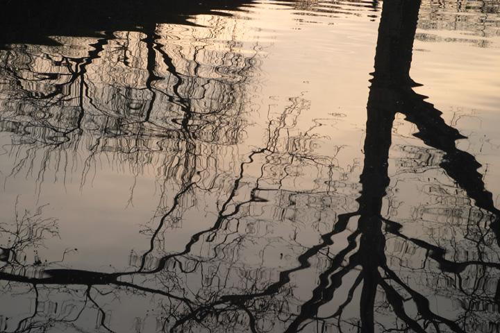 Tree Reflections.jpg