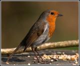 Robin and seeds