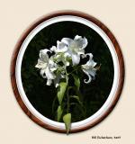 lilies framed jpg4dpr.jpg