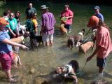 Greyhounds Wading about in Barton Creek