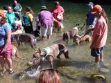 Greyhounds Splashing about in Barton Creek