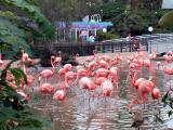 Flamingos -  Taken at Seaworld, San Diego, 2002