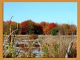 The Autumn Swamp