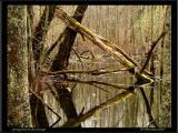 Springtime in the Swamp