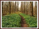 The Vinca Trail