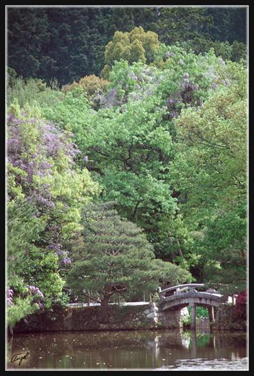 JAPON_057_MED__MED_W.JPG