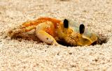Beach crab stock photo