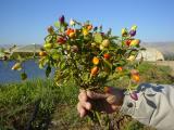 Al Ghor 13.01.2005 020.jpg