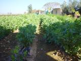 Al Ghor 13.01.2005 022.jpg