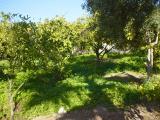Al Ghor 13.01.2005 026.jpg