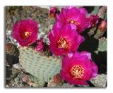 April 1- cactus flowers