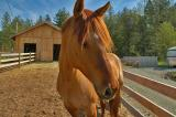 Horses, Victoria