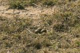 The nest - hidden in plain sight!