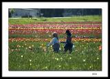 Coffee break in the tulip fields