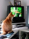 Video Catnip Fan #2