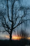 Tree and sunrise