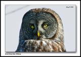 Owl_portrait1.jpg