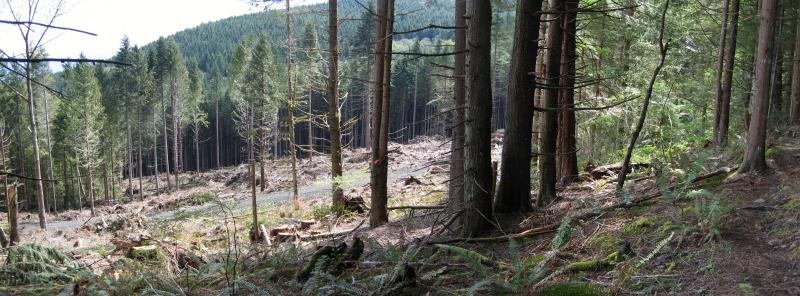 Clearcut on East Tiger
