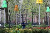 Northwest Corner - Lampshades & Tulips