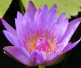 purpleclose.jpg
