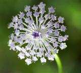 Flower15_web.jpg