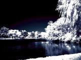 Experiment in Infrared color 3208