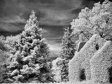 Neighbor's Ivy covered house in Infrared