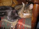 Eppy & Gus