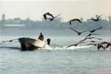 Vehickle Boat Fla birds