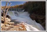 Desoto Park Falls - Tree IMG_0315.jpg