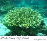 Snake Island - January 09-05