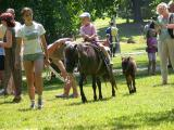 Pony Rides Festival of the Five Petal Rose