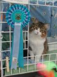 Hello - I was nominated for best in show competition!
