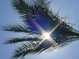 sun in the palmat paradise palms
