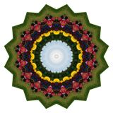 Kaleidoscopes Created from Photos