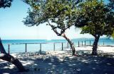 Palm Island