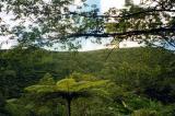 La Soufriere Trail