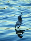 25 April 05 - Walking on Water