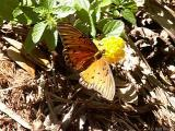 butterfly on the plantation grounds