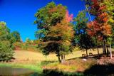 Fall Grazing