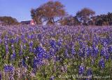 Bluebonnet Barn